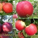 Яблоня многосортовая (саженцы)