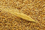 Пшеница 3 кл на экспорт 25000 т. Поставка CIF,  FOB Одесса. Порт отгрузки Одесса